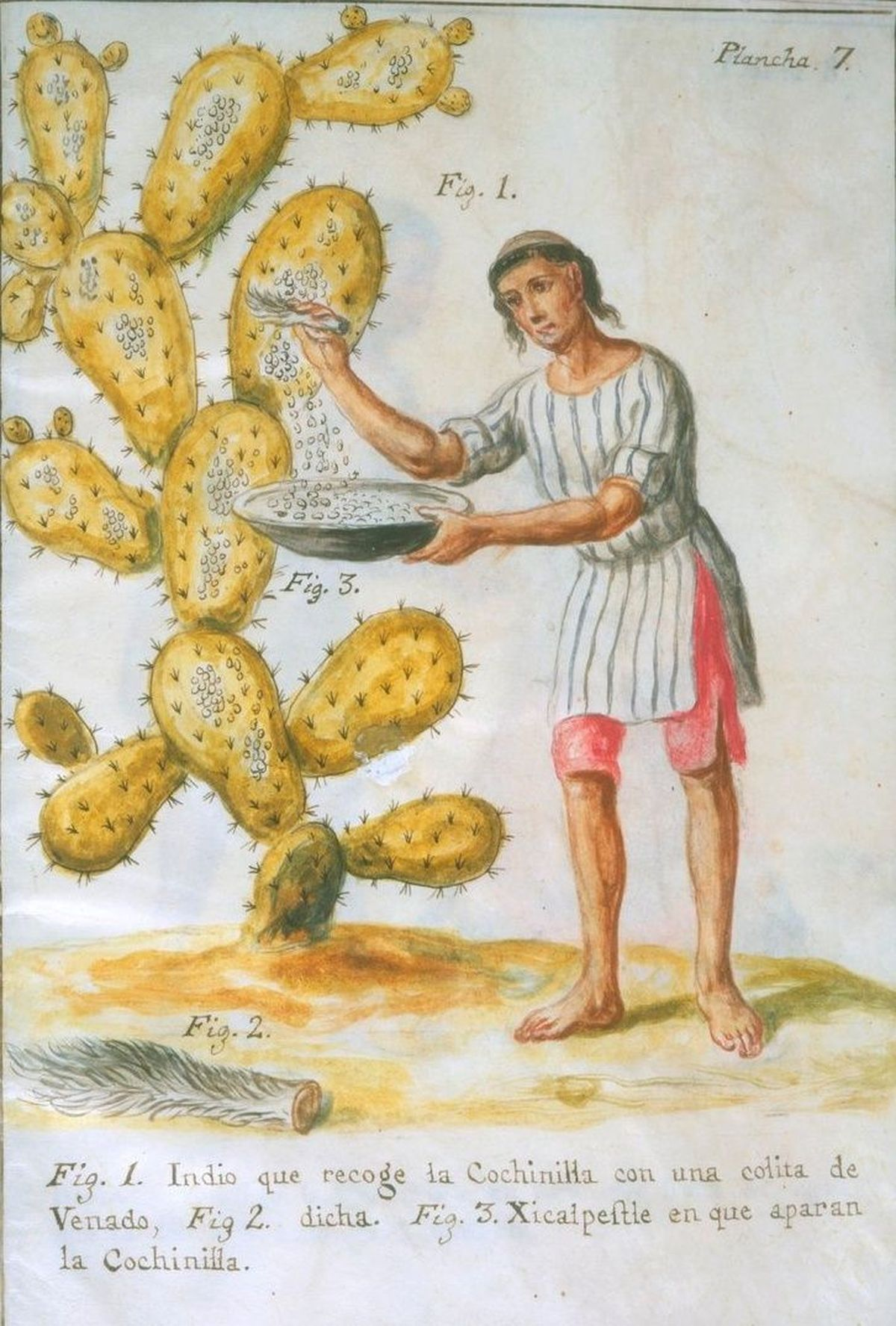 Источник: https://en.wikipedia.org/wiki/Cochineal
